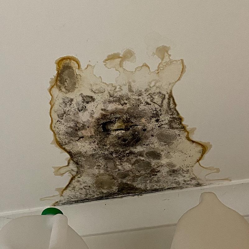 mould-remediation-melbourne